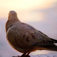 ergül çetin, kanatları bağlı kör kuşlar ve gri